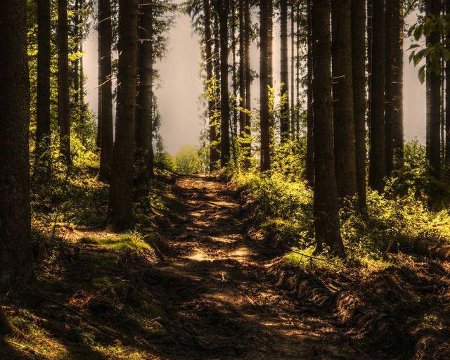 Abb. Waldbaden