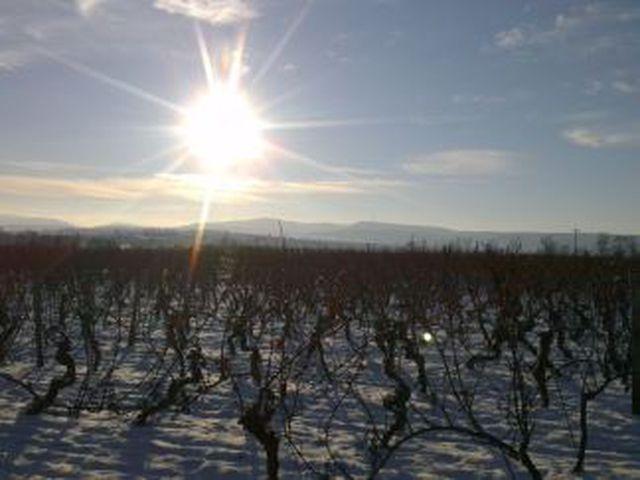 Abb. Erst Tagen, dann Winterwandern durch die Weinberge
